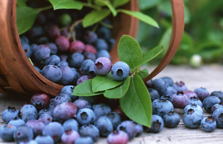 Čučoriedky - fialová bomba pre zdravie - Korela Blog f96daedf9d